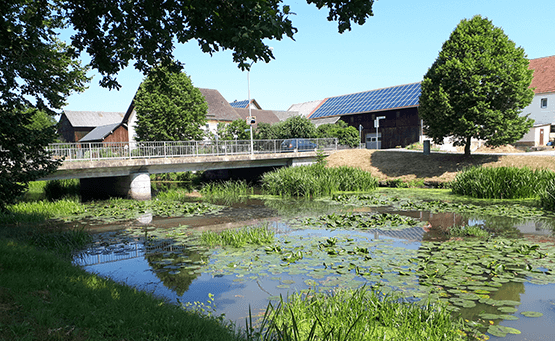 Foto von der Verlandung der Creussen in Tremmersdorf